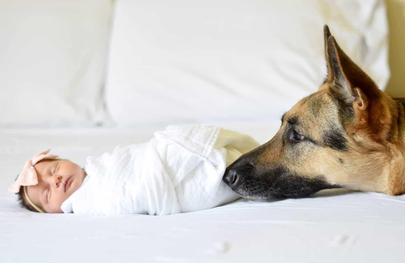 baby with dog german shepherd